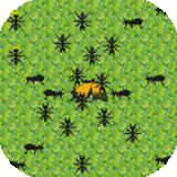 螞蟻的生活