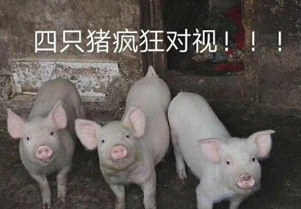 抖音四只猪疯狂对视图片分享 抖音四只猪疯狂对视图一览