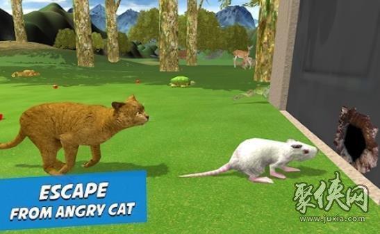 愤怒的老鼠家族