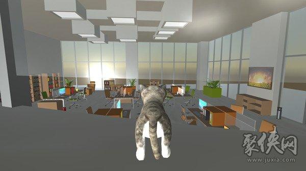 办公室的猫咪