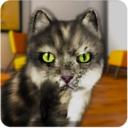 会说话的欢乐猫