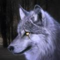 狼模拟器3D的野生动物