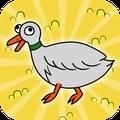 鸭子的日常
