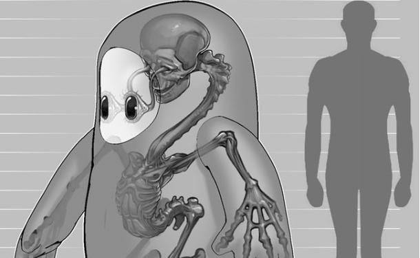 《糖豆人》官推糖豆人身高183cm,公布内部骨骼结构