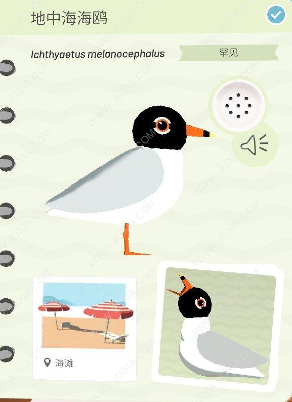 Alba攻略地中海海鸥怎么找 阿尔芭与野生动物的故事攻略地中海海鸥最全位置