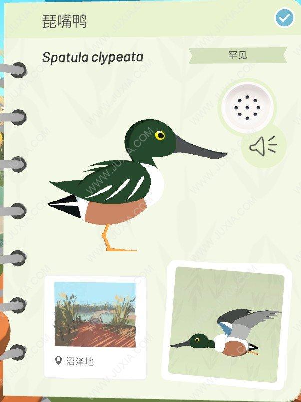 Alba攻略最全琵嘴鸭位置详解 阿尔芭与野生动物的故事攻略琵嘴鸭在哪里