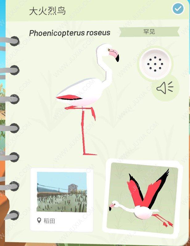 Alba攻略大火烈鸟位置怎么找 阿尔芭与野生动物的故事攻略大火烈鸟位置详解全分析