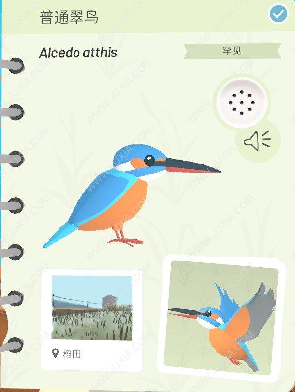 Alba攻略普通翠鸟在哪里详解  阿尔芭与野生动物的故事攻略普通翠鸟怎么找