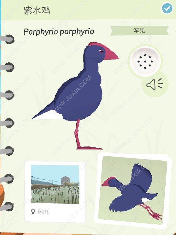 Alba攻略紫水鸡存在在哪里  阿尔芭与野生动物的故事攻略紫水鸡位置详解