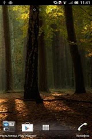 森林动态壁纸
