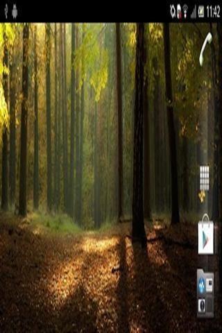 森林动态壁纸截图