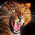 会说话的猎豹