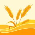 麦麦分期app